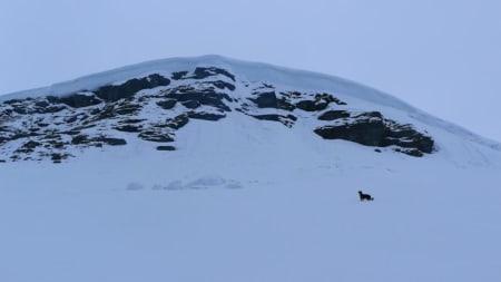 NYSNØ: Bra med snø på fjellene rundt Voss i år! Bilde: Vivi Sponland.