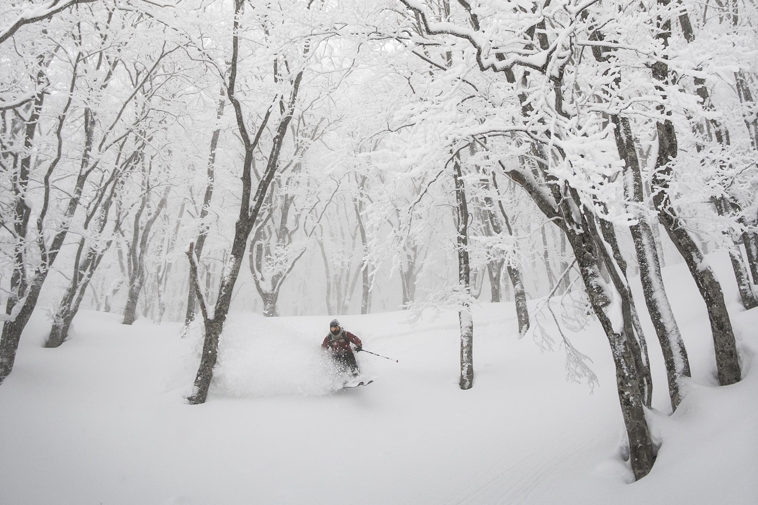 ÅPEN KALENDER: Det er den åpne skogen og snødybden som lokker folk til Japan. Foto: Daniel Rönnbäck