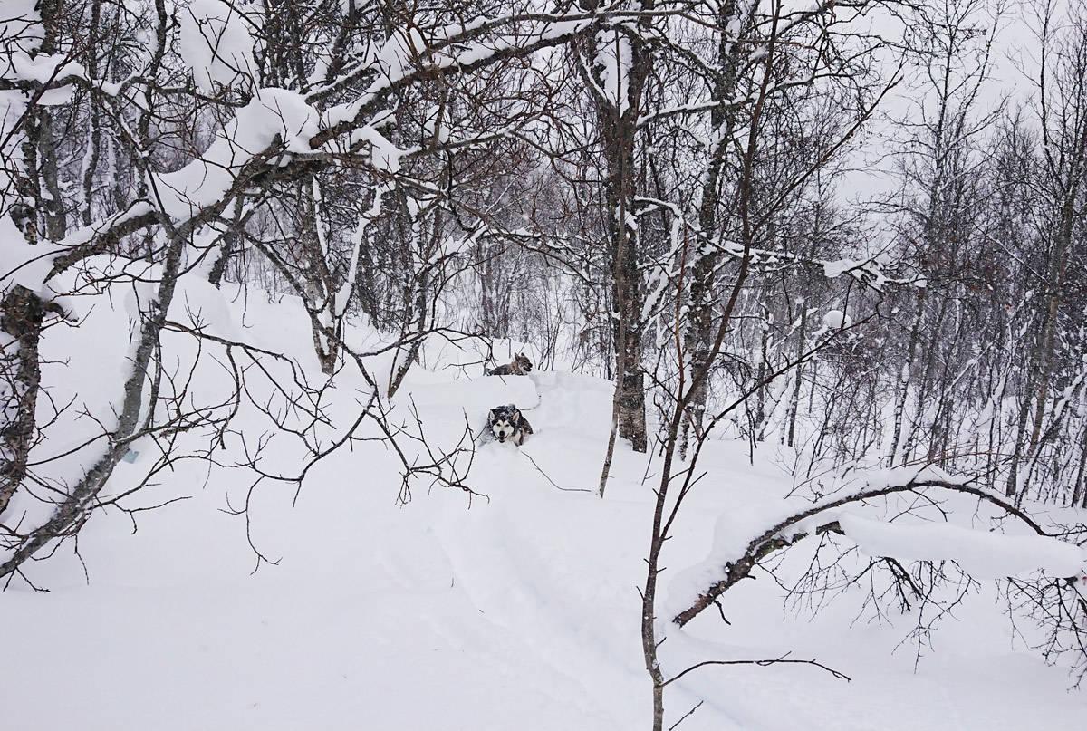 LIKE FØR Dette bildet ble tatt få minutter før fotografen ble skadet i snøskred. Foto: Lasse Vanebo