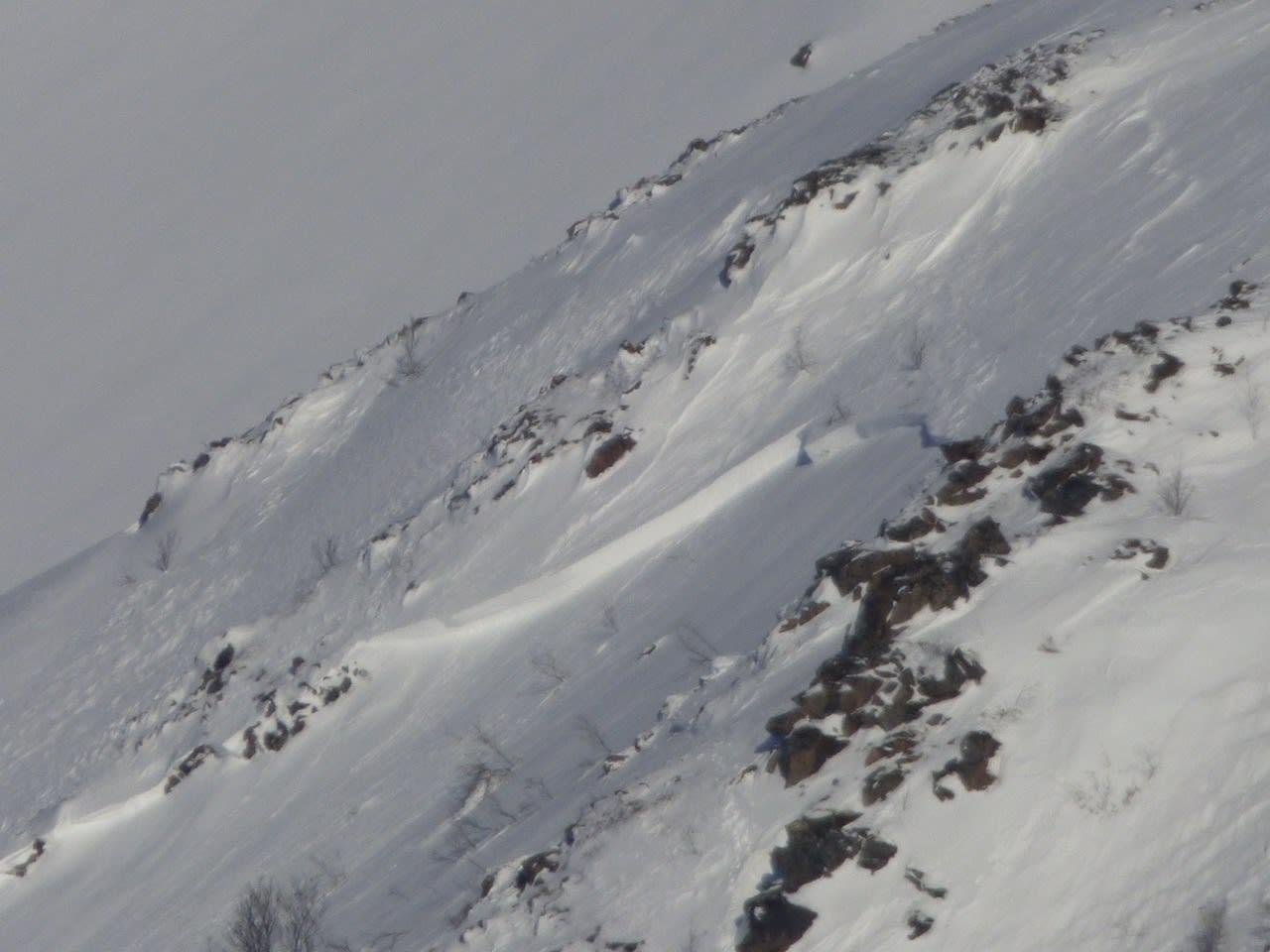 HER GIKK SKREDET: Her ser man deler av bruddkanten på skredet på Grytøya. Bildet er tatt mandag morgen. Bilde: Christian Dramsdahl