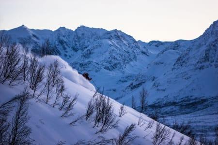 Stig Pettersen kjører pudder i fantastisk Nord-Lenangen – Foto: Ptor Spricenieks