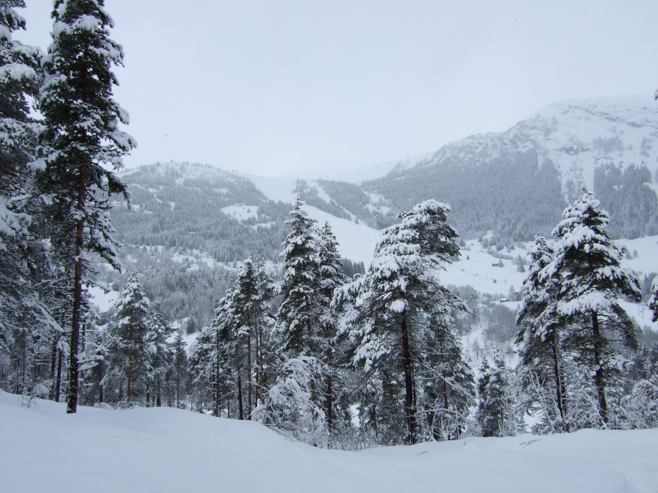 NYSNØ: Snøen laver ned i Sogn, og lørdag klokka 10 åpner Sogn & Fjordanes første skisenter for sesongen. Foto: Øystein Veum