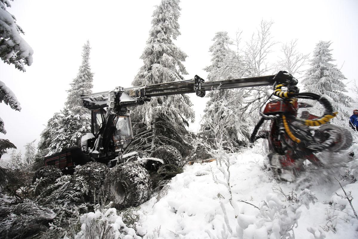 MENER ALVOR: Kvitfjell leker ikke hogging av skog. Med skogsmaskin lager de i disse dager tynnere skog og bedre frikjøringsmuligheter. Foto: Christian Bråtebekken