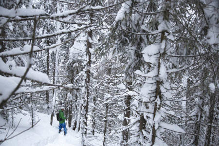 TJUKT: Stian Skinnes Fossen konstaterer at Norefjells skog ofte er for tett.