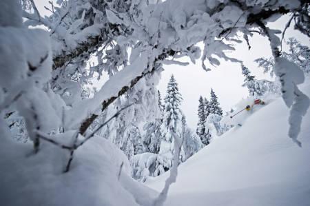 DRØMMEFØRE: I disse dager er det VM i alpint i Åre i Sverige. Det kan også være sånn som på dette bildet i Åre. David Kantermo nyter skogen i Duved. Foto: Mattias Fredriksson