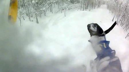 Hallingskarvet pudder pow ski freeride frikjøring fri flyt guide