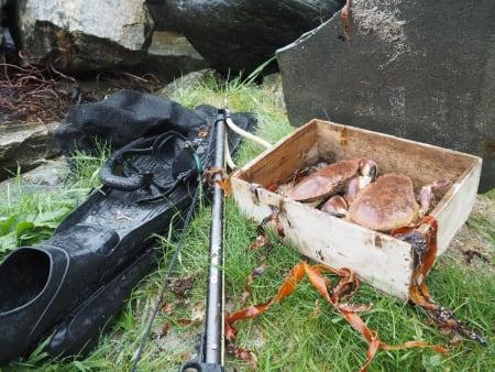 Harpunering og krabbefangst