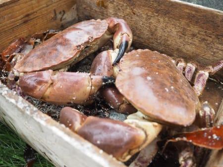 Krabbe-fangsten