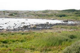 Saltstein er fortsatt preget av olje. Foto: Peter Gløersen