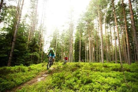 Oslo sommer sykkel