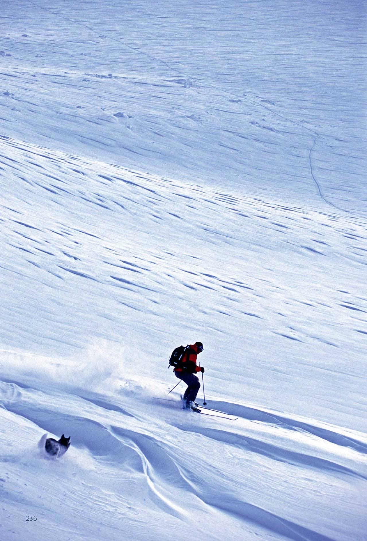 Hunden Tannaq og Jonas Abrahamsson kjører alternativ 1 ned på breen på Ristačohkka. Foto: Lars Thulin / Toppturer rundt Narvik.