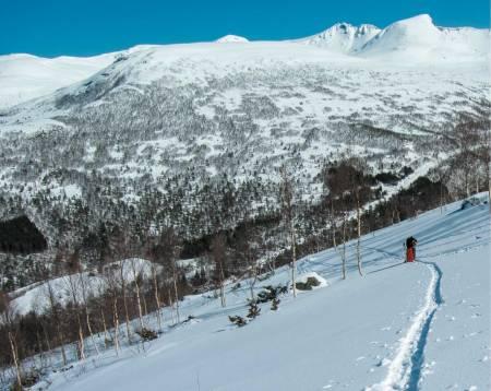 Mot Vardefjellet er det tynnet og hogd gater i skogen for å gjøre fjellet egnet for skikjøring og skileik. Her er det bare å boltre seg. Foto: Bjørn Magne Øverås