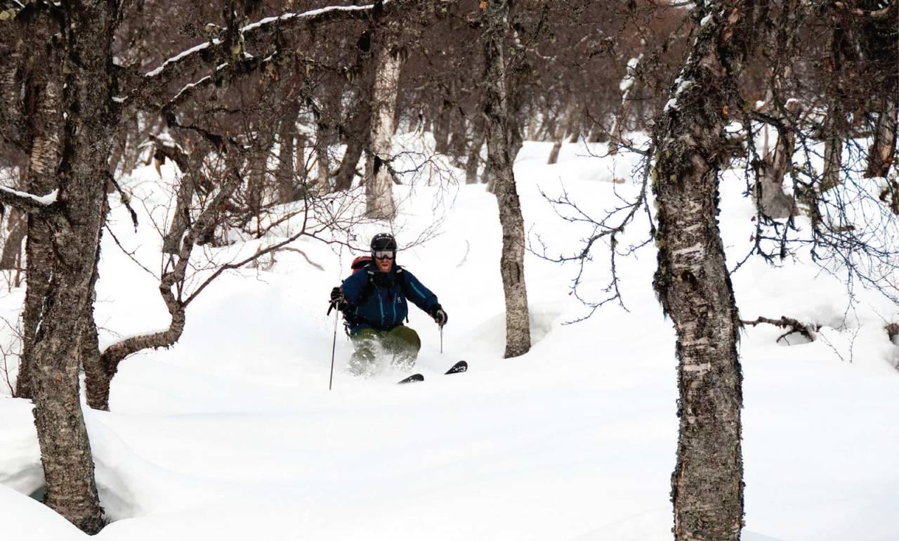 Mykje fin skogskøyring frå Togga. Foto: Bjørnar Bjørhusdal. / Toppturar i Sogn.