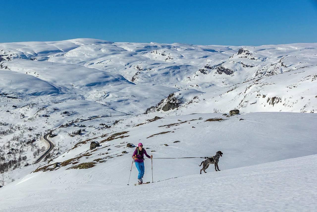 Ida Sollie og hunden Haldor legger sporet mot Røseknuten. Foto: Lars Storheim. / Toppturer i Sørvest.