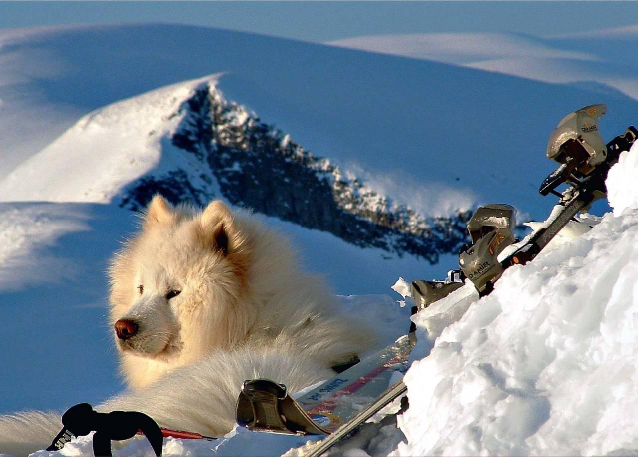 Tungt utstyr på toppen av Asbjørnsnosi. Hunden Jølle let seg ikkje merke av januarkulda. Foto: Bjørnar Bjørhusdal. / Toppturar i Sogn.