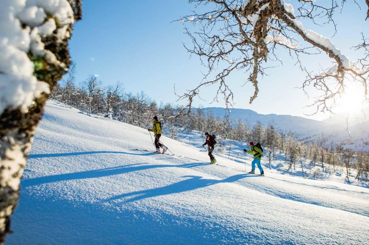 Skiløparar i snilt skiterreng som er typisk fordette området. Foto: Håvard Myklebust.