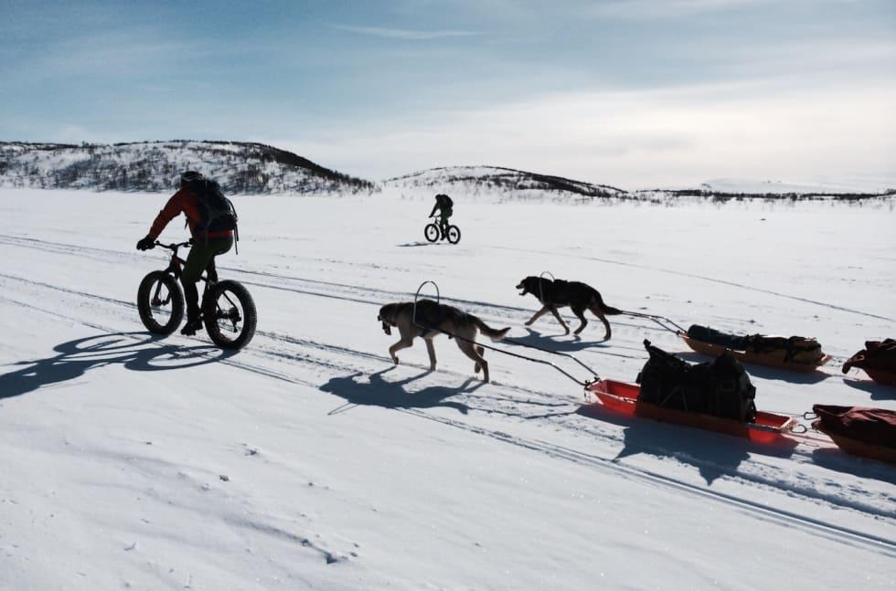 Finnmarksvidda hunder - Privat - 1400x924