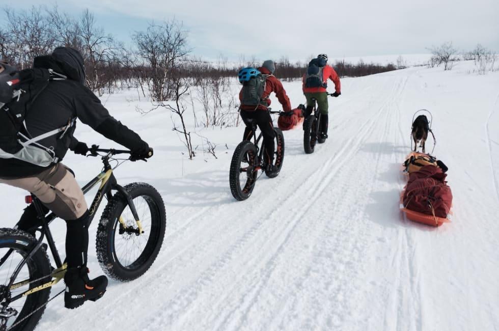 Finnmark fatbike og hunder - Privat - 1400x924