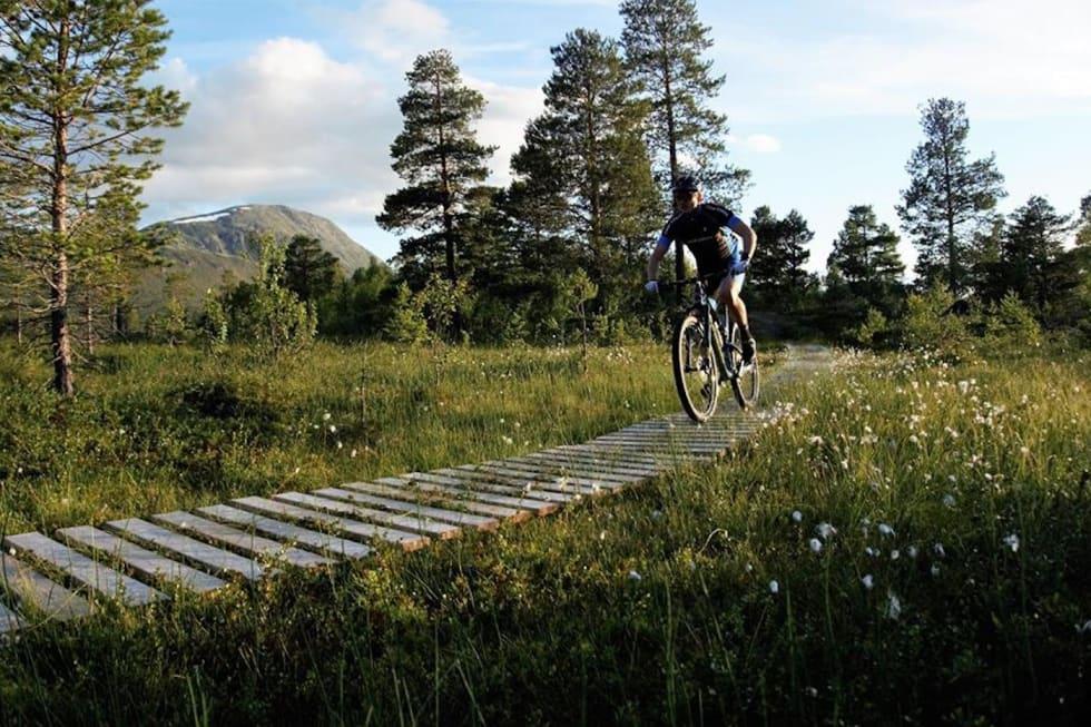 Sykkelenern 2017 - Foto Arrangøren 1400x933
