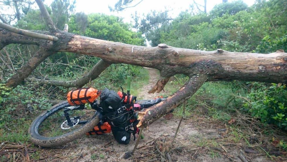 Downed tree trail - Gässler 1400x788