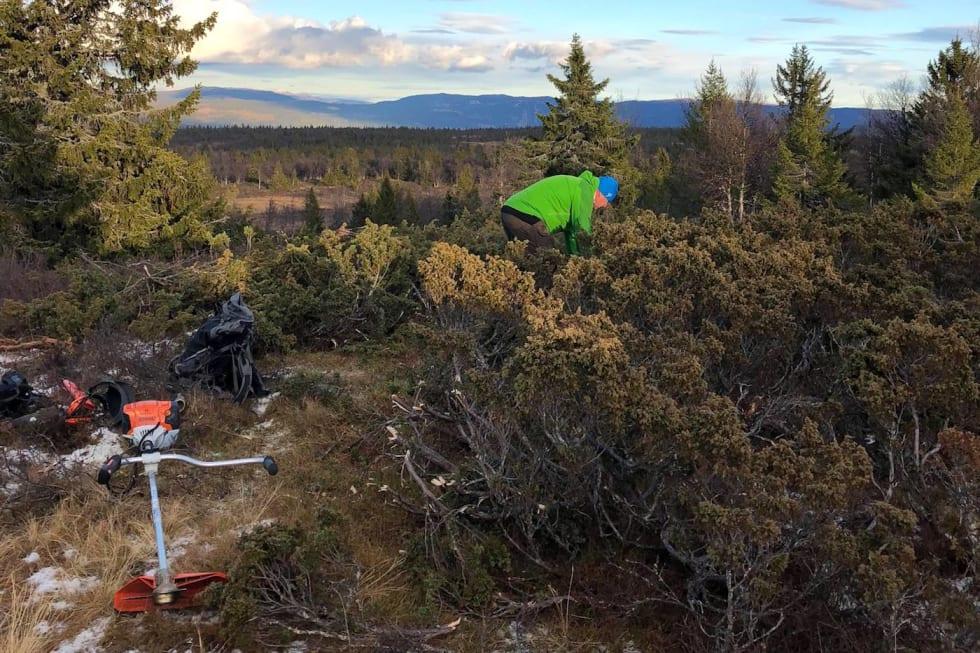 CK Valdres Oct 28-18 trail work 1 - Ole Christian Nymoen 1400x933