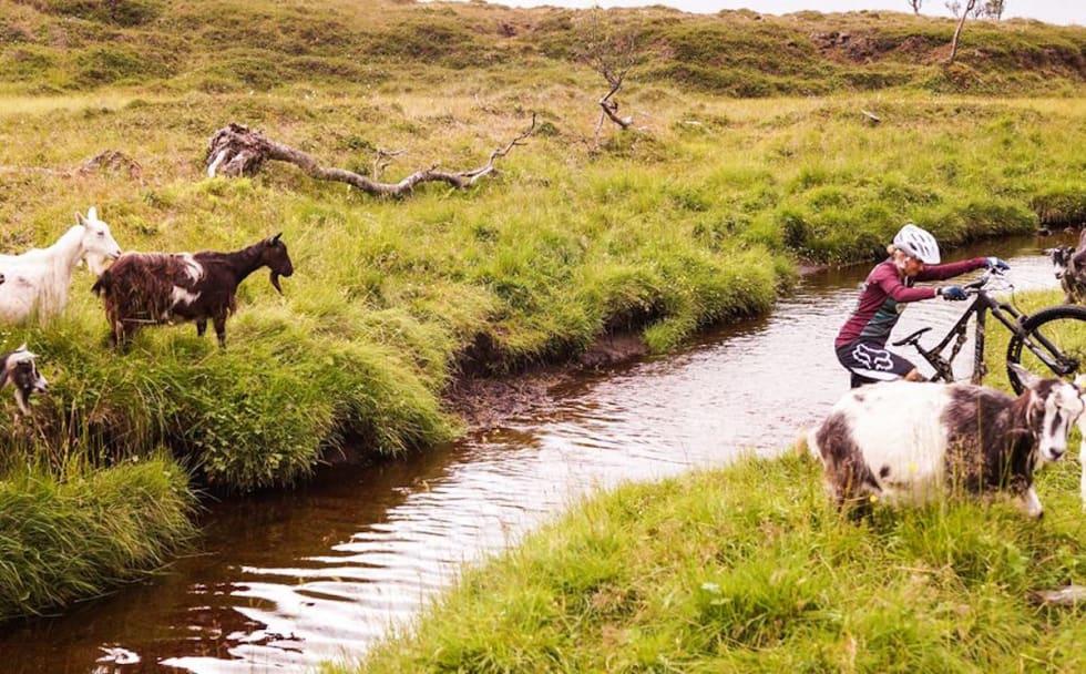 Hattvika Lodge MTB - Foto Hattvika Lodge 1200x745