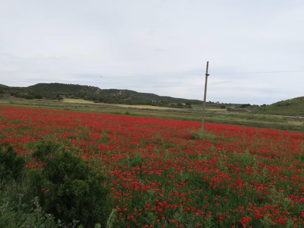 SPANIAS FARGER: De røde valmuene og jordene.