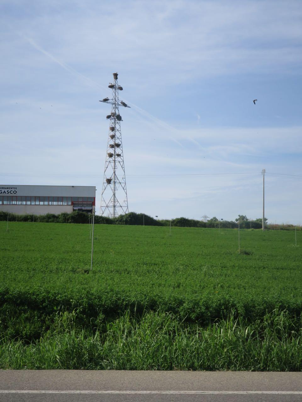 STORK-BLOKK: Aragons storker bor i kommunale bolig-tårn.