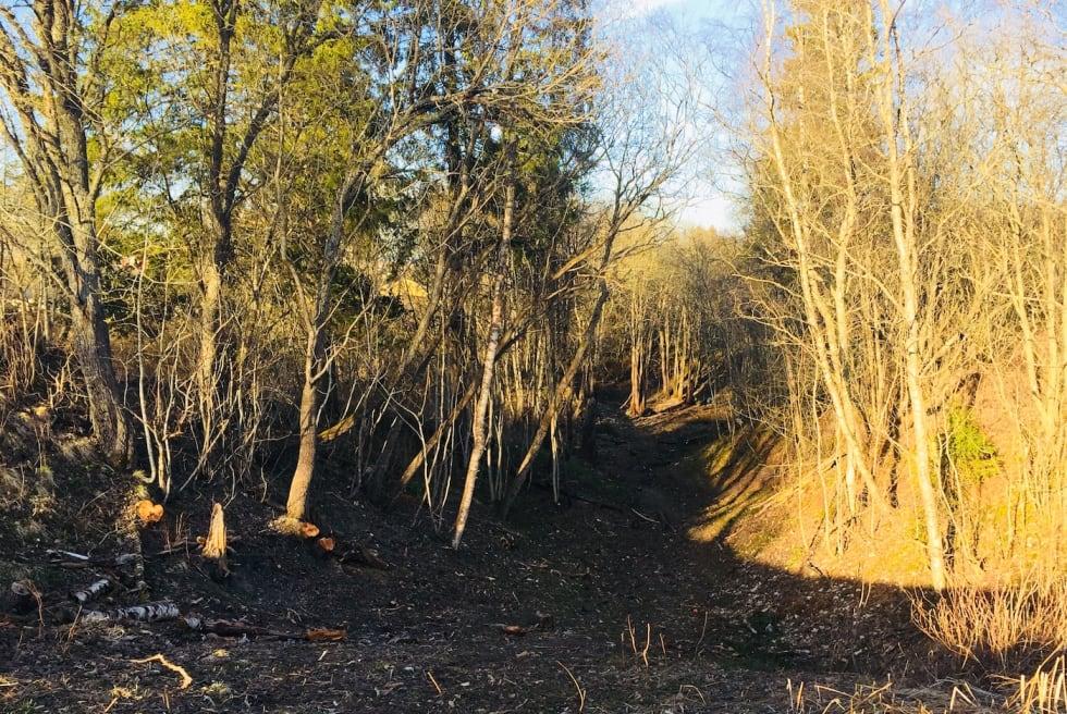 Inngang skogparti - Foto Vegard Blakstad 1400x933