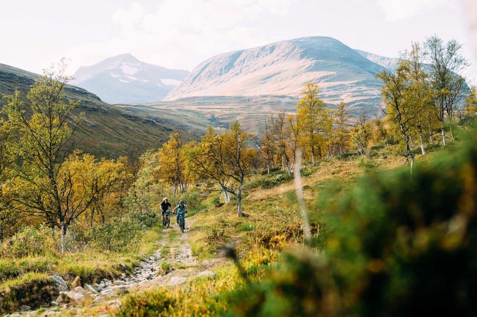 Ennå i skogen: Brorparten av turen til Pälstastugan foregår over tregrensen. Motbakkene, derimot, er mest brutale blant trærne.
