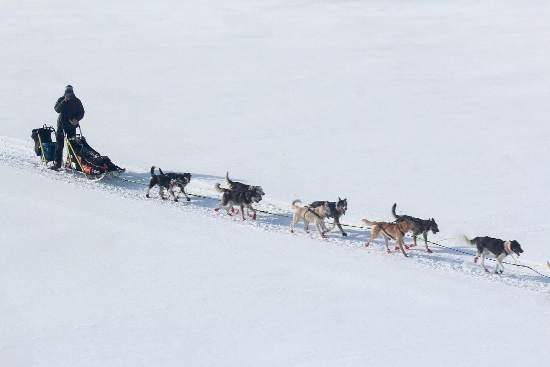 DAG 8: Et sted på Yukon River. Foto: Mille Porsild