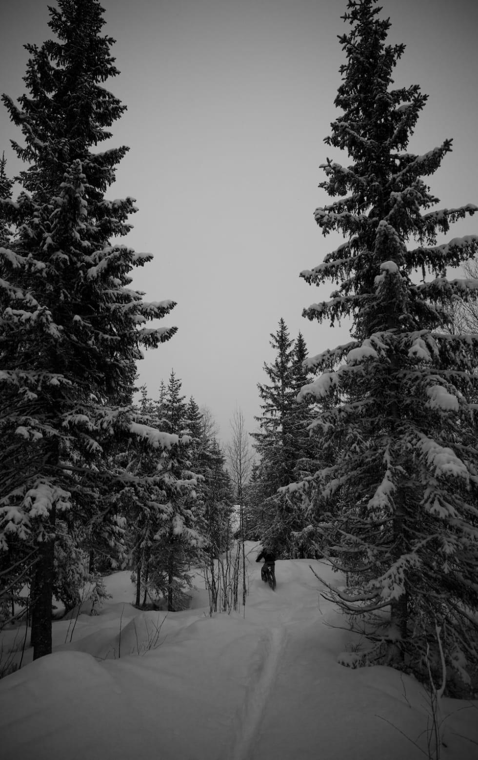 Erik Olsson - Trysil Jan 4-17 - Foto Tim Glazebrook 1000x1550