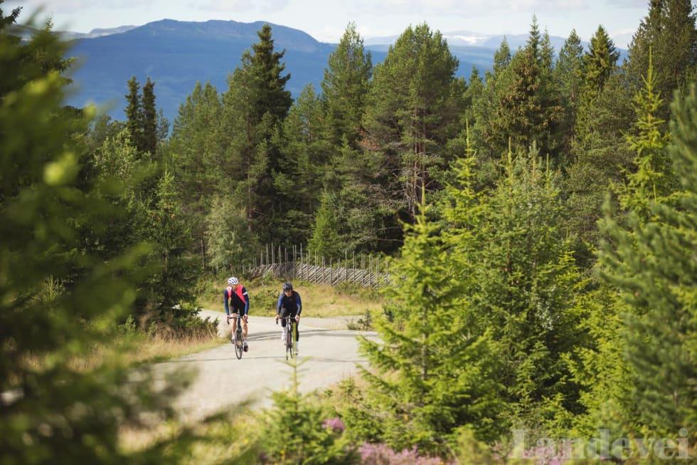 SKILLE: Peer Gynt Seterveg går gradvis over fra asfalt til grus. Stigningen inneholder jorder, beitemarker og øde fjell.