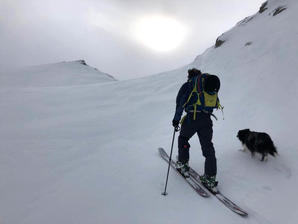 Rutsjewiggo. Wiggo ble norgeskjent etter å ha rutsja utfor Austabotnatindrenna, men er fortsatt like glad i være med Petter på tur.  Foto: Audun Holmøy Røhrt