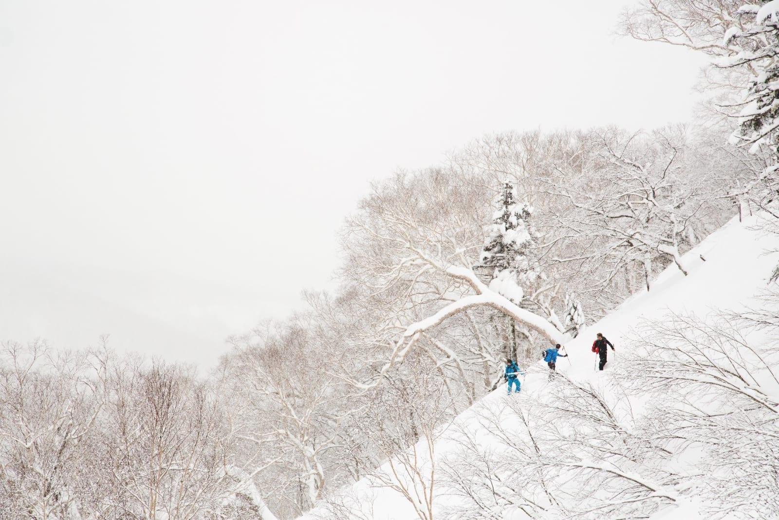 NEDSNØDDE NABOER: I Japan finnes det en tanke om at det bor ånder i trærne – kjent fra filmklassikeren «Min Nabo Totoro». Vi kan skrive under på at det iallfall bor snø i trærne.