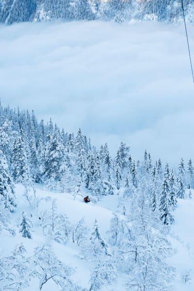 DEILIG: I skogen på vei ned til Rjukan. Foto: Anki Grøthe