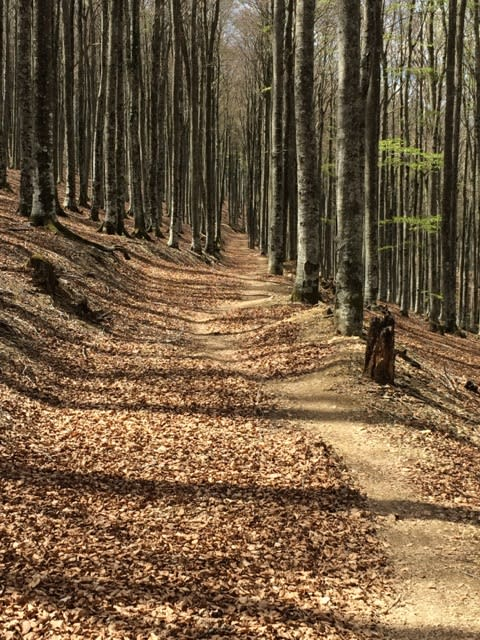 MADRE MIA: Flyt i kilometer etter kilometer.