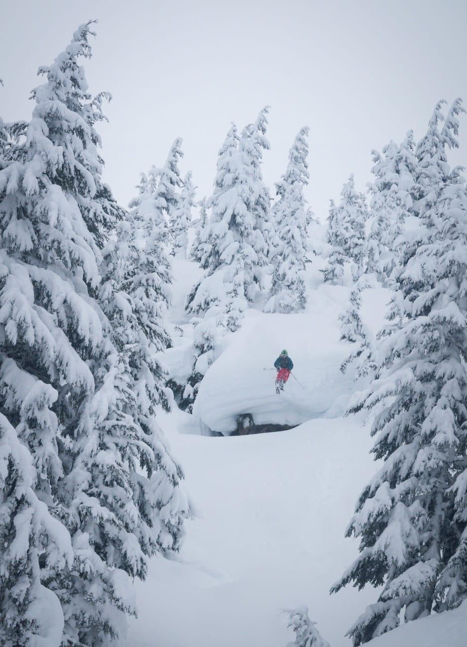 ALASKASKOG: Snøen lavet ned og snøskredene dundra ned de store fjellsidene i Alaska mens Nikolai og kompani var der i januar 2013. Da var det tryggest å holde seg i skogen. Bilde: Joel Shute