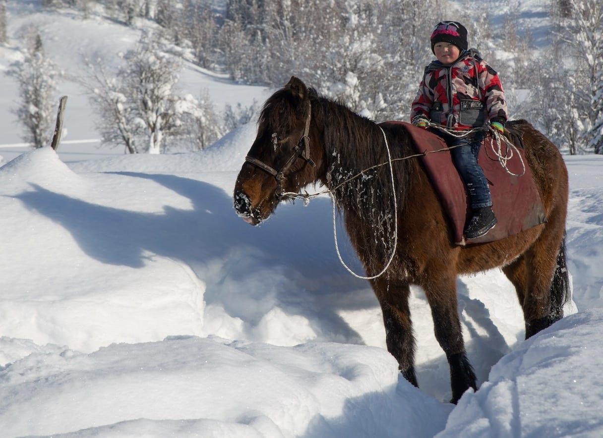 ARVING: Ineral er fem år og erfaren rytter. Hesten er arbeidsredskap, transportmiddel og mat i Altaifjellene. Bilde: Espen Finstad