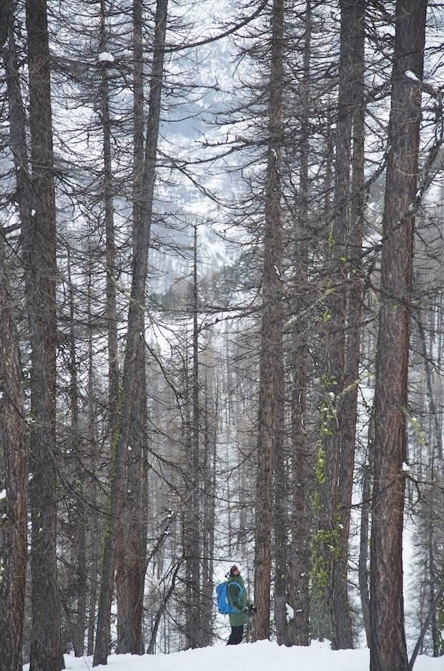 LIVSGLEDE: – Skogskjøring er det morsomste som finnes. Bortset fra å kjøre renner i Nord-Norge, sier Henning S. Skjetne som reiste hjem til Norge da våren kom, selv om han hadde sesongkort i Serre Chevalier.
