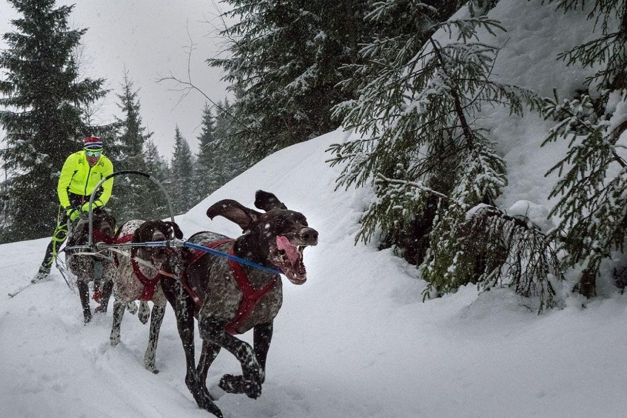 Dog Power 14 credit Jordan Schevene_preview