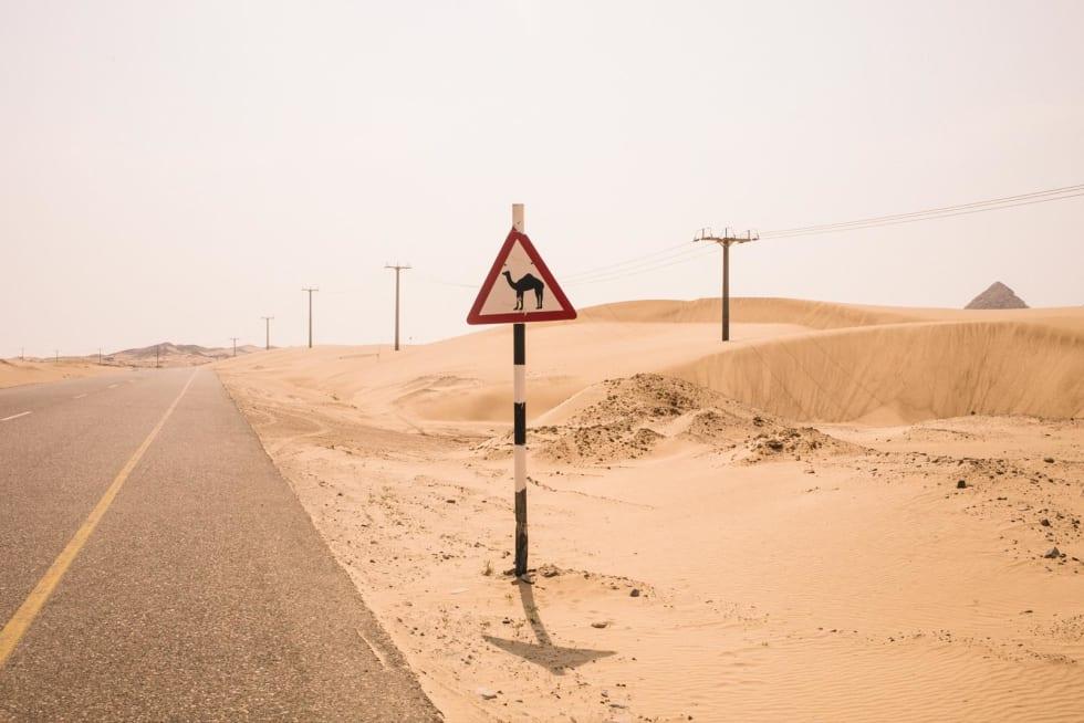 STOR ELGFARE: Om du heller snø på bakken og bytter ut kamelen med en elg er du straks tilbake i Norge.