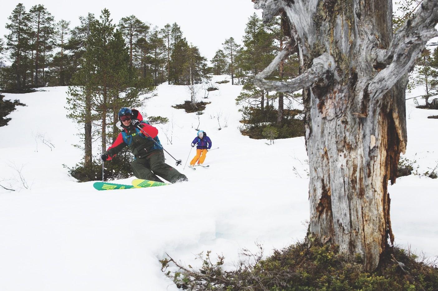 KOS I SKOGEN: Tore og Terje setter opp farta mellom furuleggene nederst på Tydalsnebba.