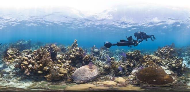 Foto: XL Caitlin Seaview Survey