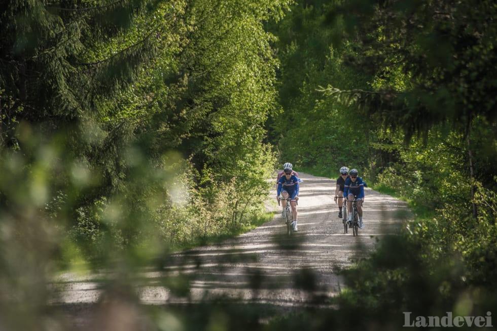 SKOGTUR: Skog, skog, skog og mere skog. Eller jorder. Og skog.