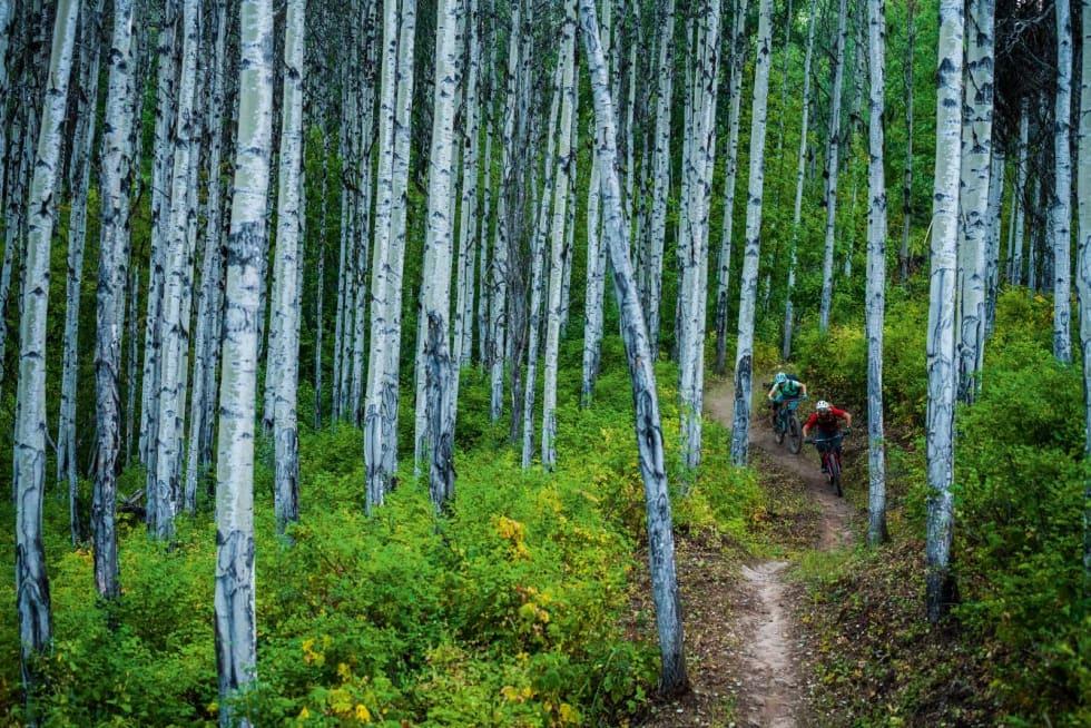 ØSTENFOR: I skogene rundt Smithers, øst for Terrace finnes også stor variasjon. Julia og Daniel finner flyten.