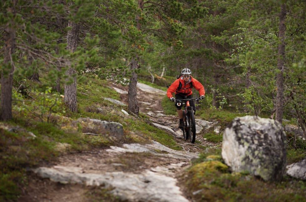 DOBLE SPOR: Flere av stiene i og rundt Alta bærer preg av ATV-kjøring. Erik Eide Bye prøver å følge en smal sti.