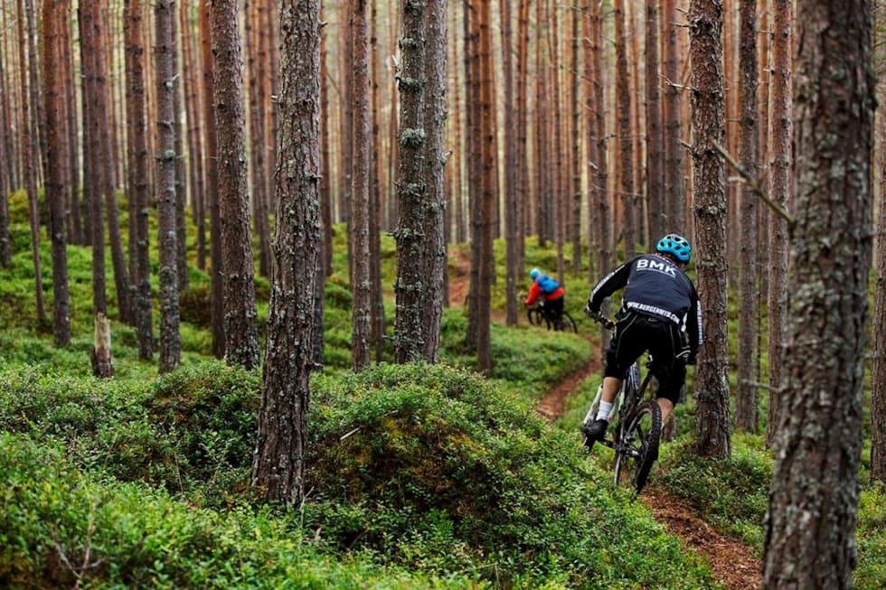 Forskerne har blant annet spurt stisyklistene om hva de er ute etter når de sykler i Sogn for å finne ute hvordan sambruk kan koordineres for å unngå konflikter. Foto;: Kristoffer Kippernes