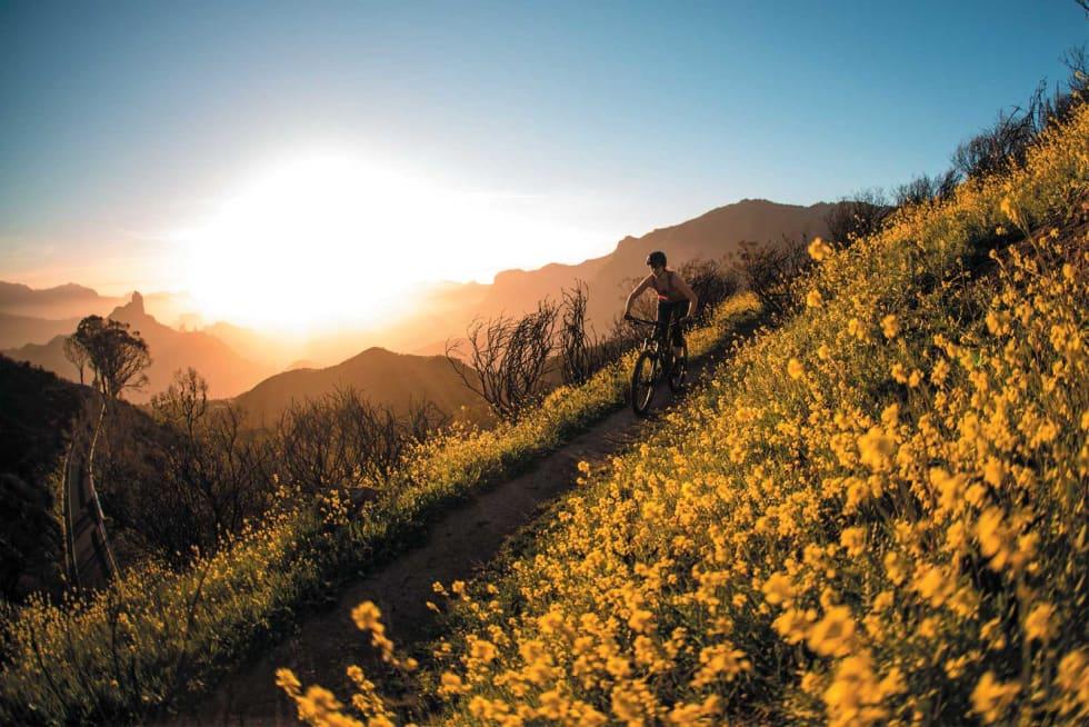 FIELDS OF GOLD: På vei ned til fjellandsbyen Tejeda i den gyldne timen på deilig flytsti. Anbefales!