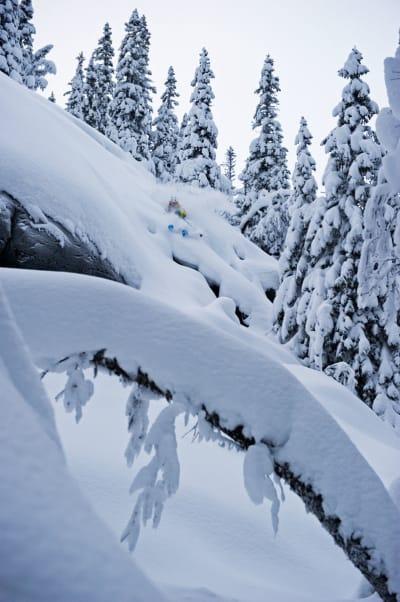 SVENS DRÖMSKOG: David Kantermo kjører i skogen i Duved. Foto: Mattias Fredriksson
